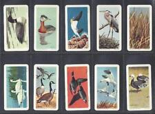 Overseas Issue Birds Collectable Cigarette Cards