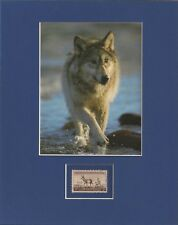 Gray Wolf - Wildlife Conservation - Frameable Postage Stamp Art - 0549