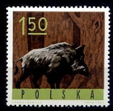 Wildschwein. 1W. Polen 1965