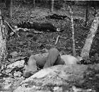 Confederate Dead Soldiers Little Round Top Gettysburg 8x10 Civil War Photo 1863