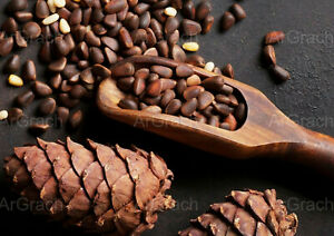 Organic Pine Nuts 2021 Harvest Wholesale Vacuumed Pinon nuts Pinoli Pignoli kg