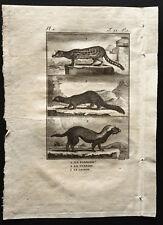 1799 - Buffon - La fossane, le vansire, le grison - Gravure