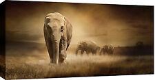 Grande boîte éléphants TOILE ART IMAGE sépia Mur Art 103x52 cm 3 cm frame