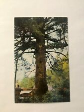 """FATHER OF TREES"" TREES OF MYSTERY REDWOOD HIGHWAY CALIFORNIA VTG POSTCARD;CA17"