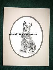 FINE-ART PRINT, w/ oval mat, Australian Cattle Dog Blue Red Heeler Puppy drawing