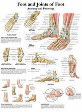 Cartel médico A3-el pie y articulaciones humano (libro de texto médico de imágenes de anatomía)