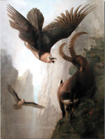 """oil painting handpainted on canvas """"Bearded Vultures Attacking an Alpine Ibex  """""""