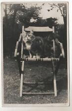Cat On A Chair - Real Photo Postcard c1920