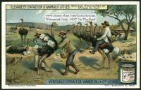 Cowboy Riding An Ostrich INTERESTING c1915 Trade Ad Card