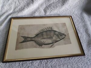 Old master drawing or etching of a fish P.63