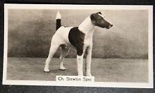 Smooth Fox Terrier   Vintage 1930's Champion Photo Card  # VGC