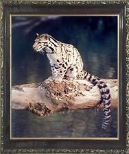 Snow Leopard Exotic Big Cat Wildlife Animal Wall Decor Mahogany Framed Picture
