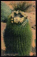 Barrel Cactus Visnaga on the Desert Vintage Linen Postcard pc351