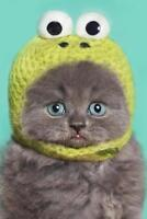 Funny Gray Kitten in Green Frog Hat Photo Art Print Poster 24x36 inch