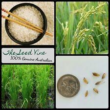 20+ ORGANIC ASIAN RICE SEEDS (Oryza sativa) Edible Rice Aromatic Grain