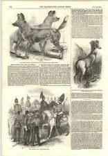1854 NUOVO CAVALRY Corps per la Crimea Cape CANI DA CACCIA