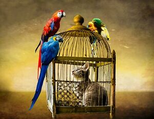 METAL REFRIGERATOR MAGNET Tabby Cat In Birdcage Parrots Humor
