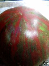 Pink Berkley TIE DYE TOMATO Heirloom Stripes! Striped Non-GMO Organic 20 Seeds