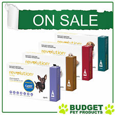Revolution For Dogs Flea Heartworm Treatment - 6 Pack