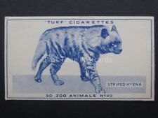 No.49 STRIPED HYENA - Zoo Animals - Carreras / Turf Slides (Plain back) 1954