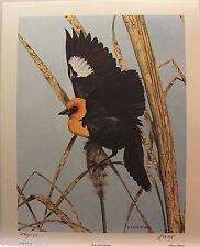 "Randy FEHR "" Yellow Headed Blackbird "" LTD art print  mint print COA Certificate"