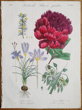DRAPIEZ Handcolored Garden Flowers Rare Folio Crocus Peony 73 - 1833