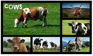 Kühe - Neuheit Souvenir Spaß Kühlschrank Magnet - Brandneu - Tiere / Geschenk