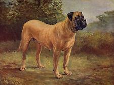 MASTIFF LOVELY IMAGE ON DOG GREETINGS NOTE CARD