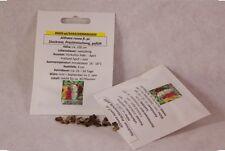 Stockrose Prachtmischung gefüllt Althaea rosea Samen Saatgut Saat Profiqualität