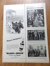 1958 Black White Scottish Scotty Terrier Westie Ad Guest Train Station