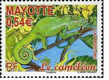 mayotte ca 2007 cameleon reptiles animaux animals 1vmnh **