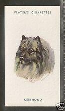 1940 Uk Peter Biegel Dog Art Head Study Portrait Player Cigarette Card Keeshond
