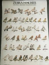 Poster Zebra Finches Large Waxbill Finch Bird Poster for Birdroom Wall