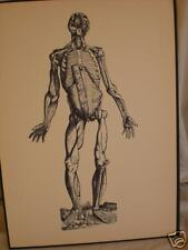 antique ANATOMICAL MEDICAL PRINT human CHEST ribs arms