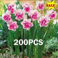 200* Mixed Color Daffodil Narcissus Flower Bonsai Seeds Plant Decor Garden