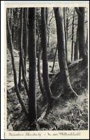 SCHARBEUTZ 1939 AK Baum Bäume Wolfsschlucht Wald Partie