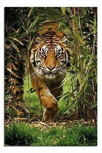 Bamboo Tiger Poster - (24 x 36 Inches)