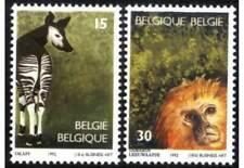 Belgique**OKAPI + SINGE TAMARIN à Tete d' Or-1992-Monkey-NSC-animaux-animals