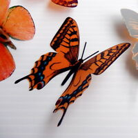 12 Pack Butterflies - Orange - 5 to 6 cm - Cakes, Weddings, Crafts, Cards,