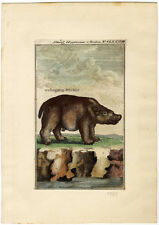 A male Hippo, Original antique hand colored engraving, from 1785.
