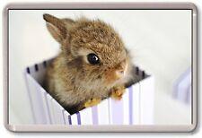 FRIDGE MAGNET - BABY RABBIT - Large - Cute Nature Wildlife