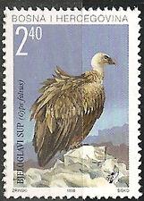 BOSNIA-CROATIA 1998 Fauna White-headed Vulture MNH