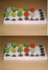 2 x Jordan 9 B ~ 20 Büsche blühend, Höhe ca. 1 cm