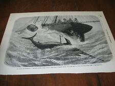 1886 Art Print Engraving - Ocean Fishing for Swordfish Fish Ship Keg Harpoon