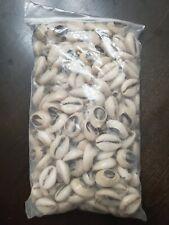 Bolsa de Caracoles Dilogun Cowrie shells 1lbs Religion Ifa Santeria Osha Orisha