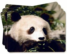 Panda Bear Picture Placemats in Gift Box, ABP-2P