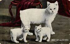 Manx Cat, Isle of Man, 1919, Margaret Lidbury, Chellaston, Derby   Q1958