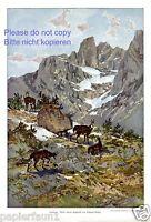 Gemsen XL Kunstdruck 1910 von Eduard Heller Berge Schnee Gams Gemse Gämse Wild
