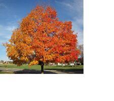 Tree Cuttings