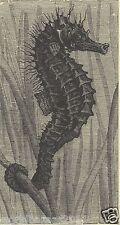 Victoriano Caballito de mar vida marina Impresión Biología Marina Náutica Sea Horse